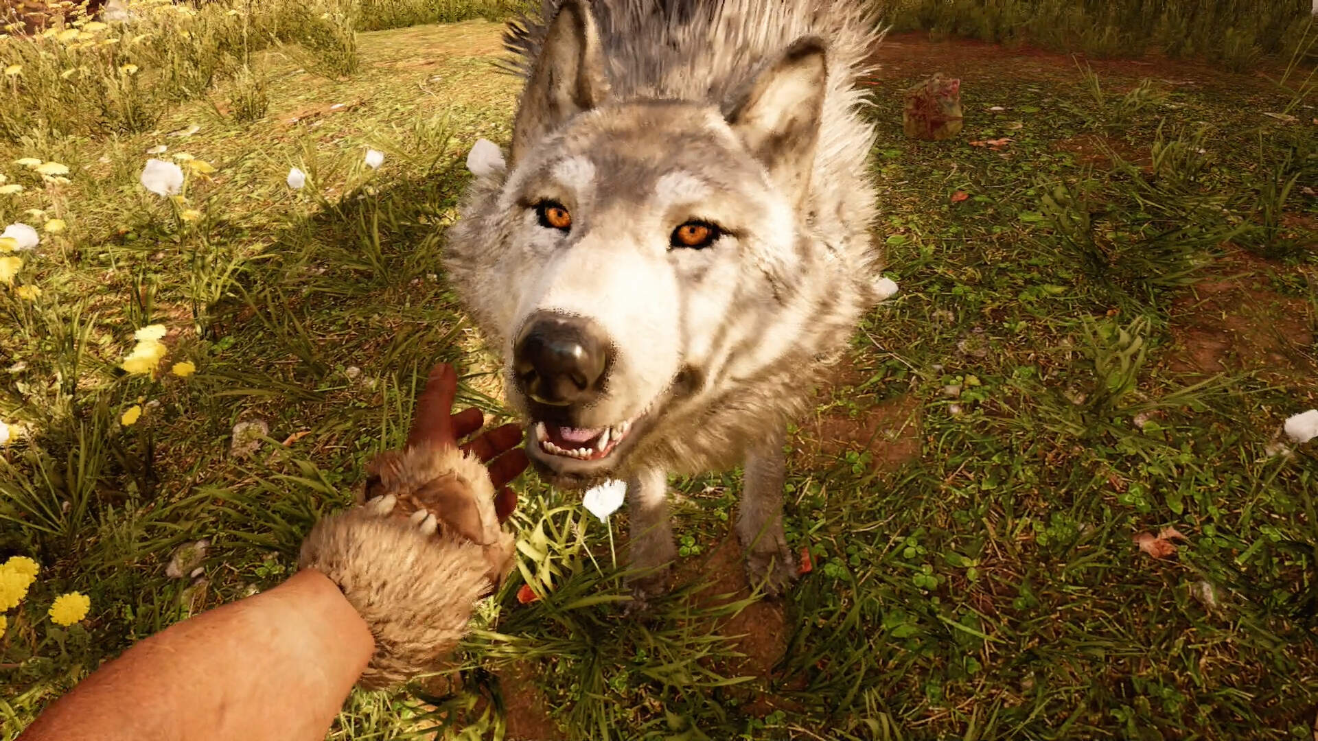 Far Cry Primal - How to Get the Owl and White Wolf