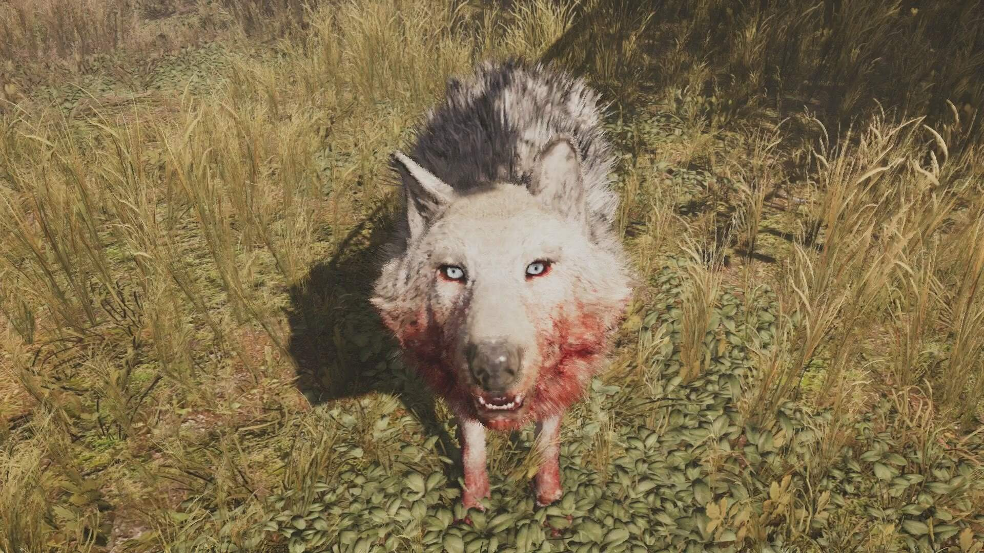 Far Cry Primal Beast Master Hunt - The Snowblood Wolf