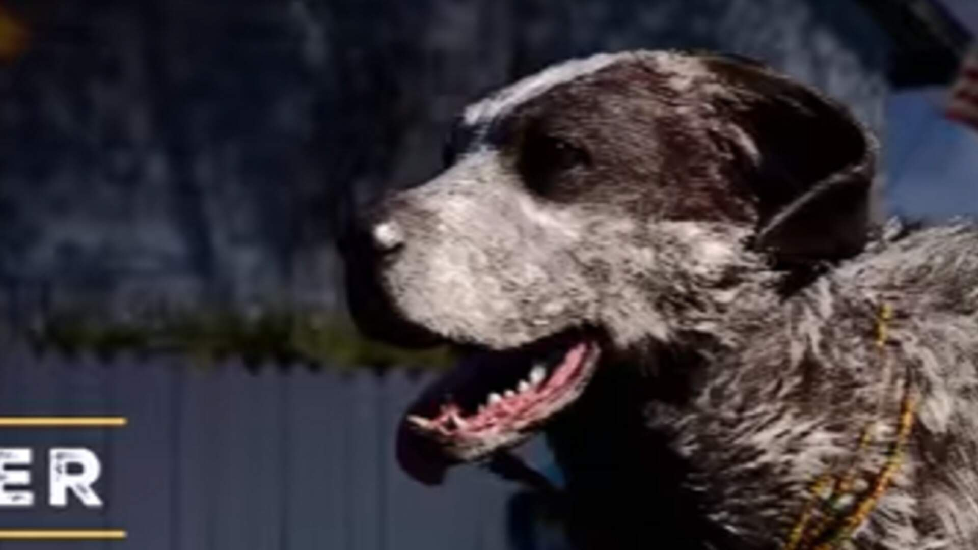 Far Cry 5 Has a Dog for Hire