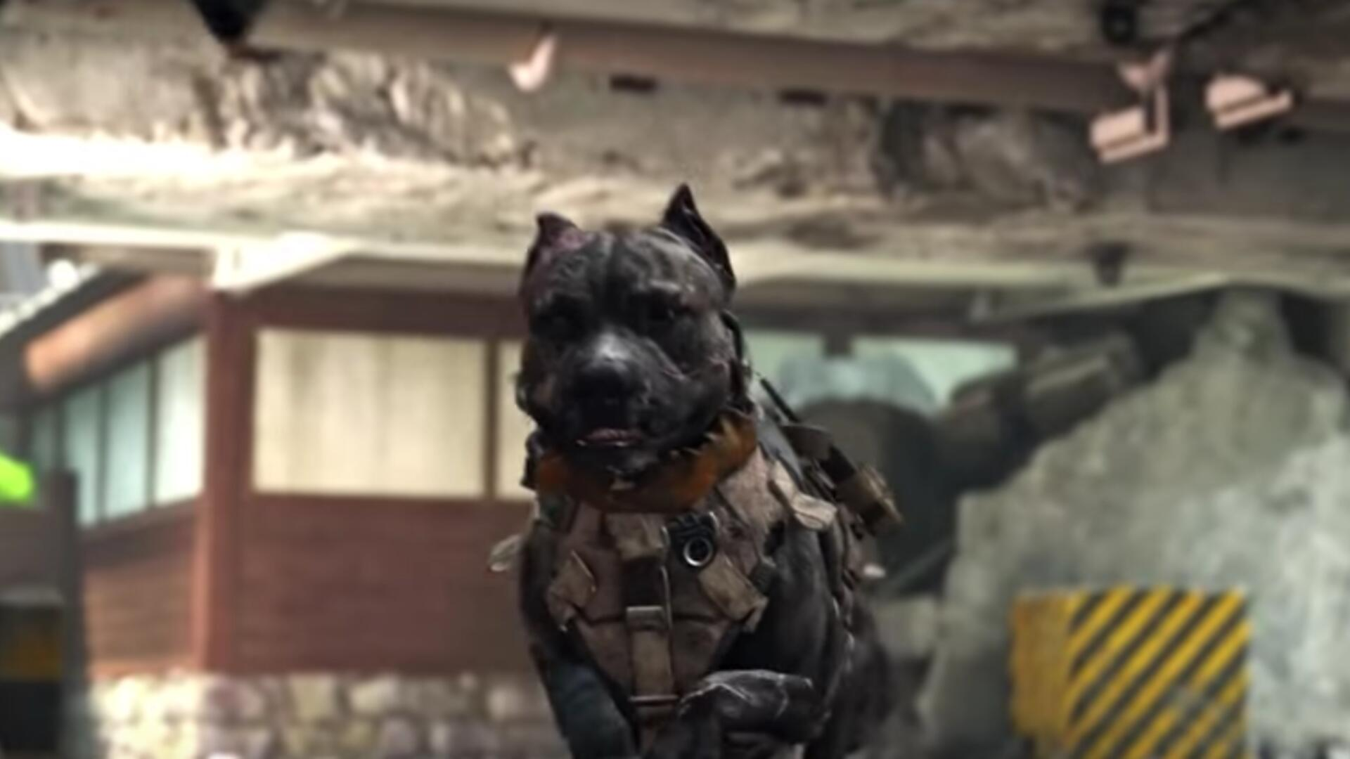 The Dogs in the Black Ops 4 Beta are Hilariously Broken