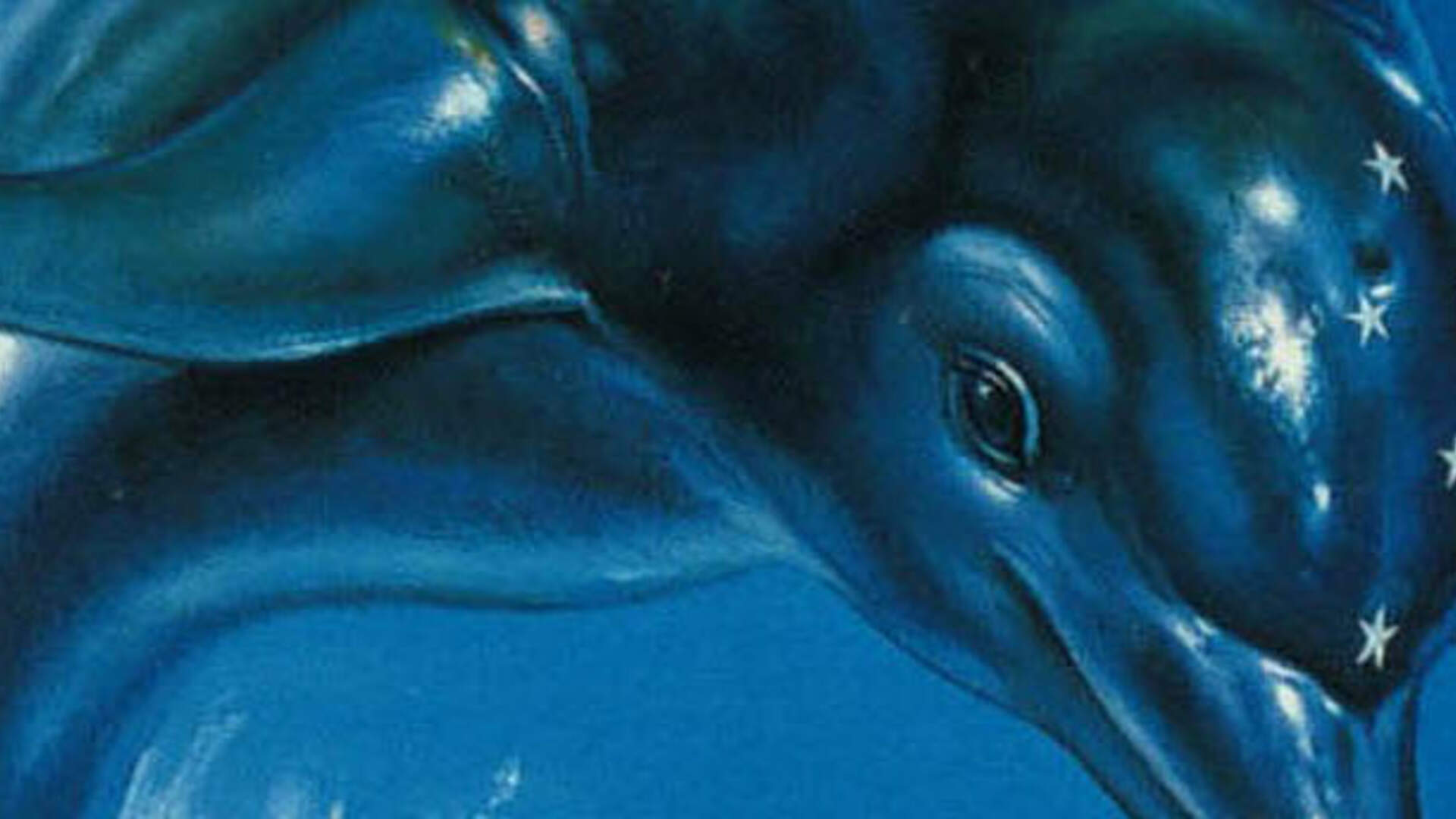 Ecco the Dolphin Celebrates 25 Infuriating Years of Life