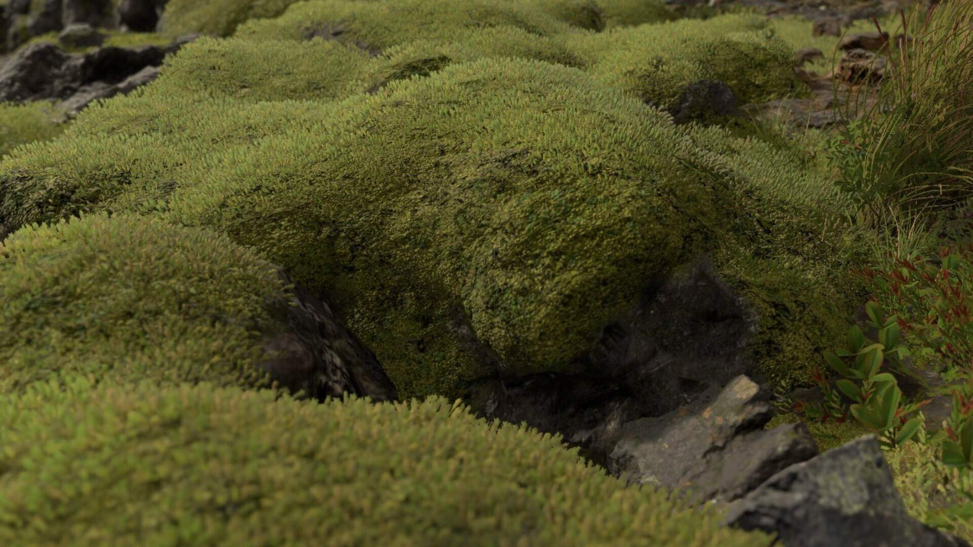 Kojima Tweets a Picture of Moss and Gets 1,000 Retweets and Counting