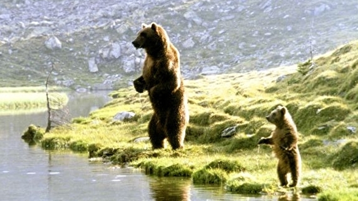 Losing my lust for hunting, thanks to The Bear • Eurogamer net