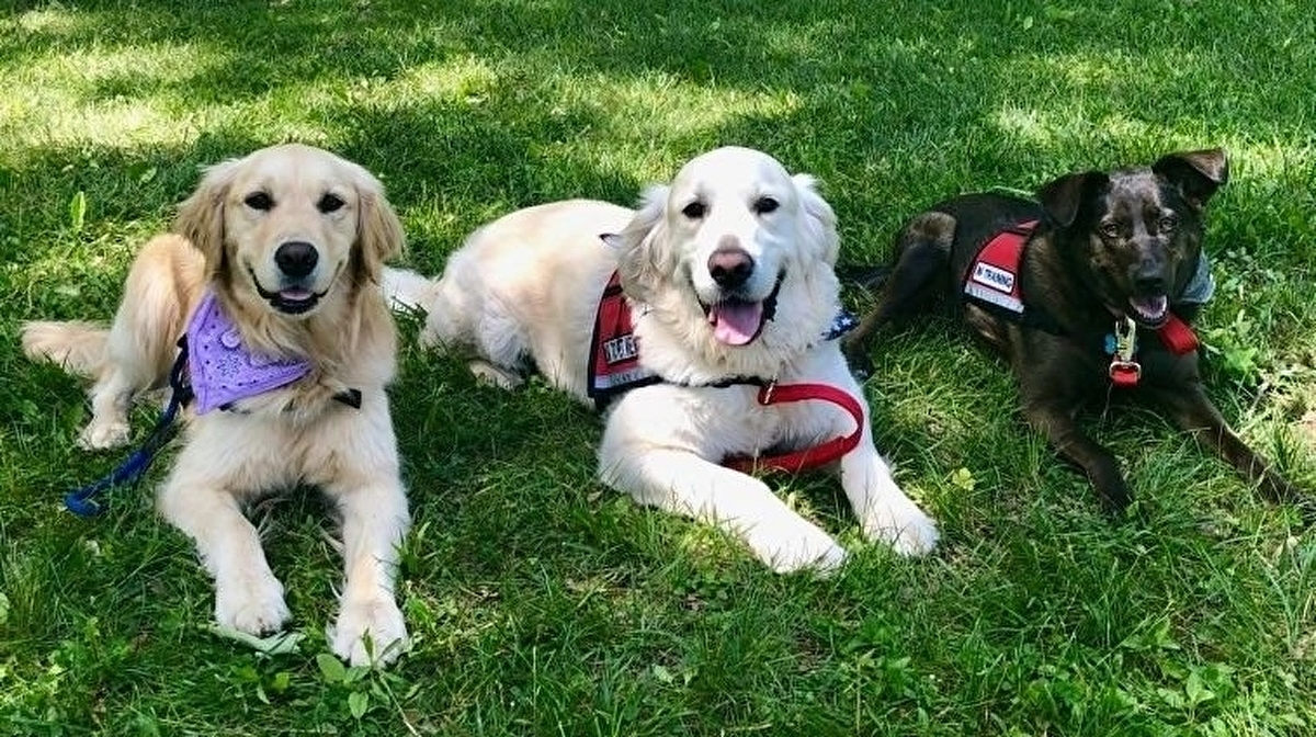 Super Smash Bros. tournament enlists help of therapy dogs to combat performance anxiety
