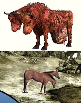 Localisation_vs_culturalisation_Brahman_bulls_and_two_headed_horse