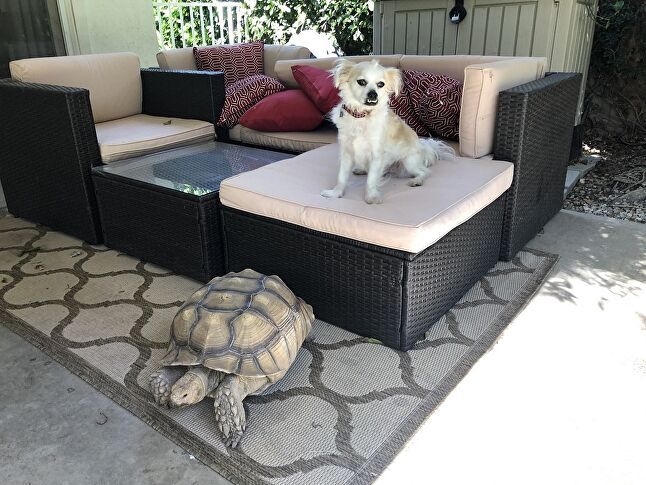 Galileo (Dog) and Chronos (Tortoise), submitted by David Logan, CEO of Akupara Games