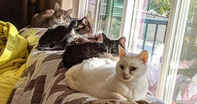 Precious, Luna, Artemis, and Pepper, submitted by Bryan Pawlowski, lead engineer at Timberline Studio