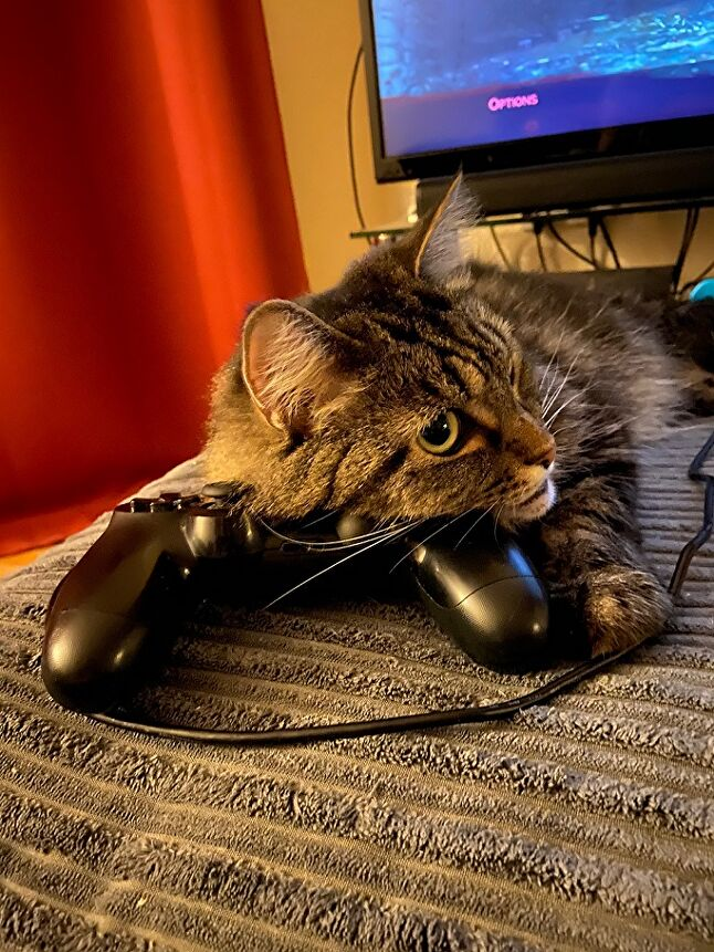Lola, submitted by Koei Tecmo Europe marketing manager and cat dad Lee Skittrell