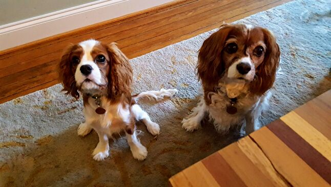 Louie (left) and Nellie, submitted by Big Huge Games COO Judith Hoffman