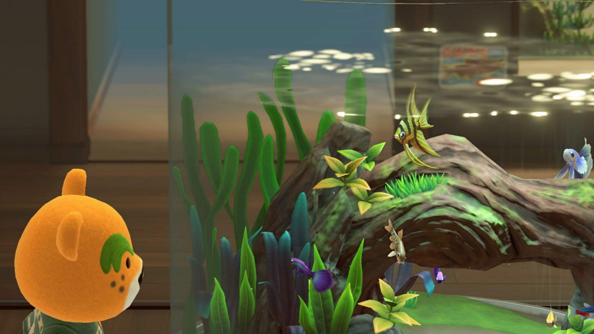 Animal Crossing New Horizons: How to Catch an Angelfish