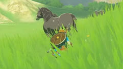 I'm Going to Spend Hours Staring at Hyrule's Wildlife in Zelda: Breath of the Wild
